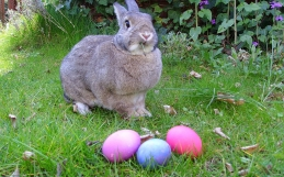560K Hatch & Grow Easter Toys Recalled For Child Safety